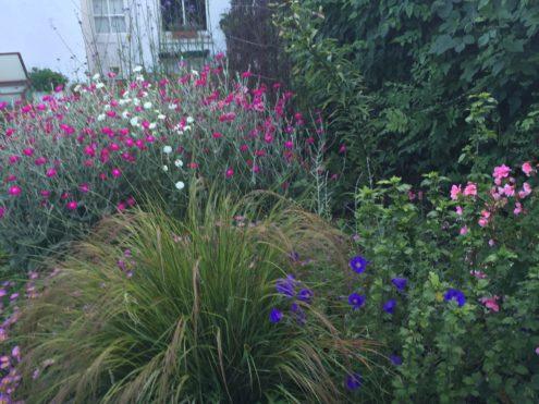 Garden at Heathwood Gardens, photo Martha Gowans, 3